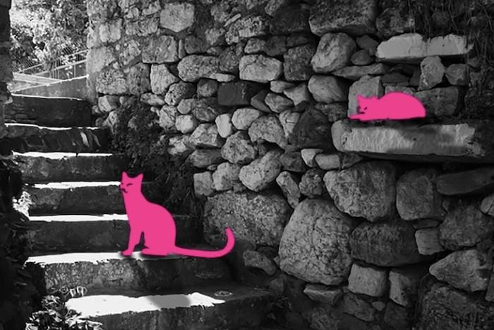explore-athens-cats-most-quirky-unusual-unique-virtual-events-in-2021
