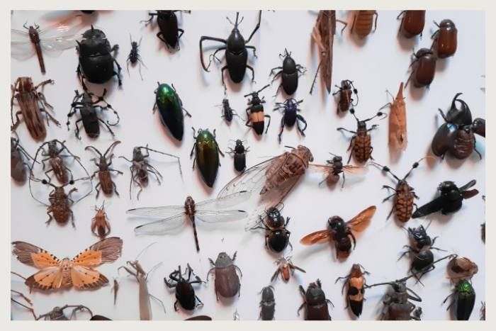 make friends with insects during unique virtual events