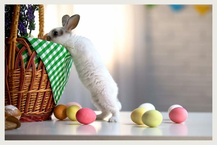 easter bunny looking for eggs during unique virtual events