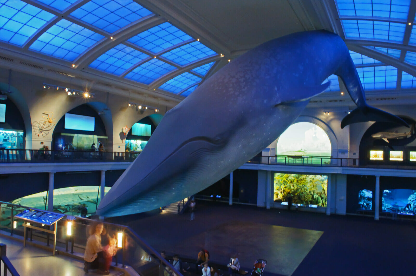 The Best 30th Birthday Party Ideas in NYC: sleep the musuem of natural history