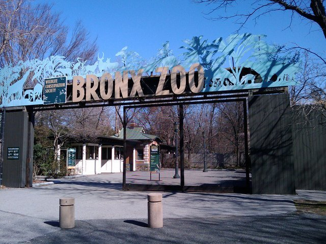 Head to the zoo! 5 Novel Places To Celebrate Your Next Birthday In NYC