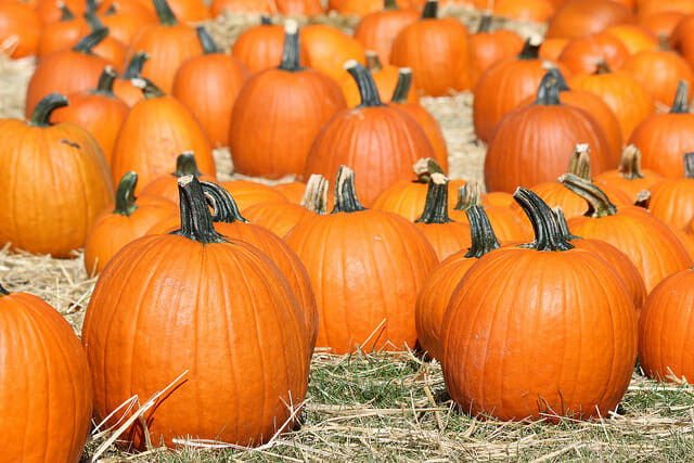Pick some pumpkins this fall at Clancy's. Things To Do and See in SF This Fall
